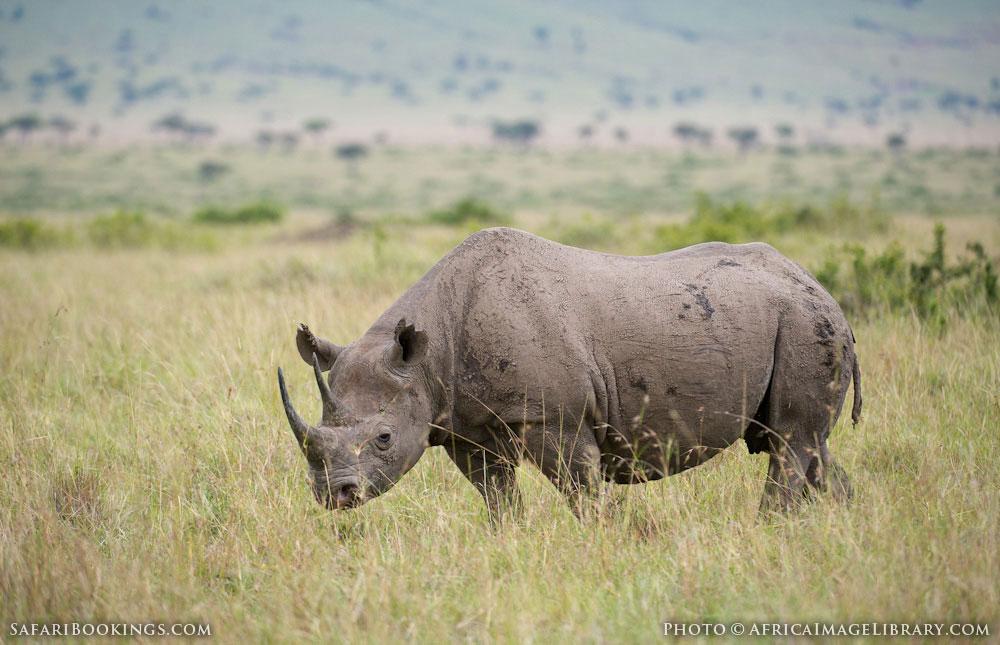 http://photos.safaribookings.com/library/kenya/xxl/Masai_Mara_National_Reserve_045.jpg