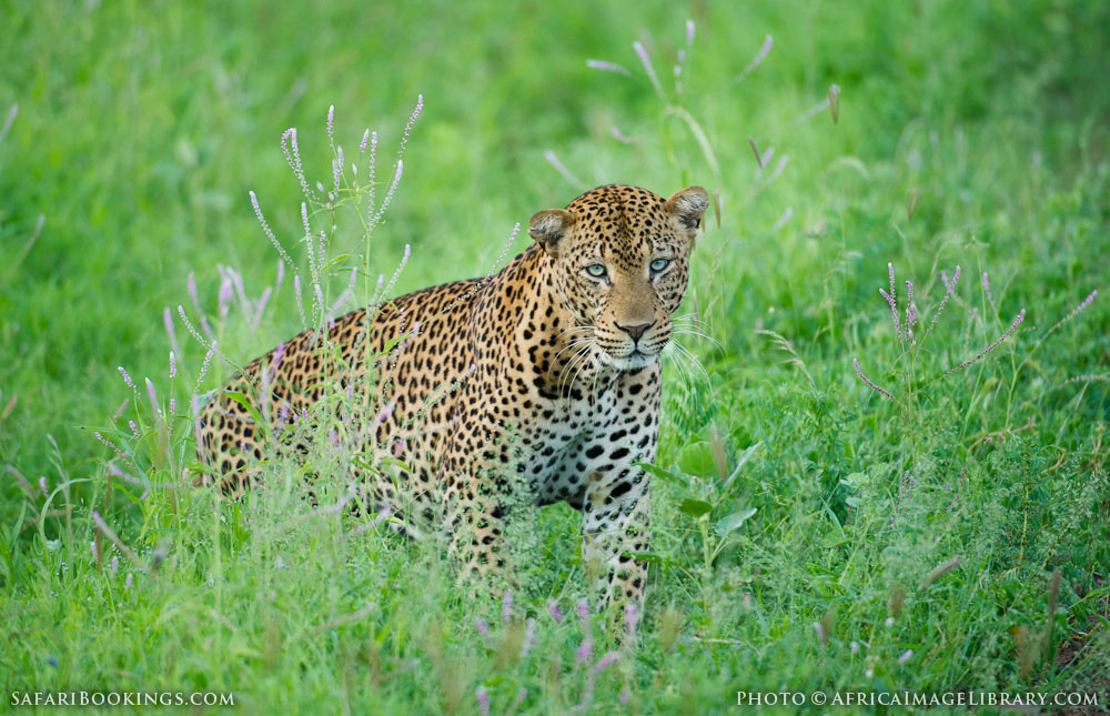 http://photos.safaribookings.com/library/kenya/xxl/Meru_National_Park_026.jpg