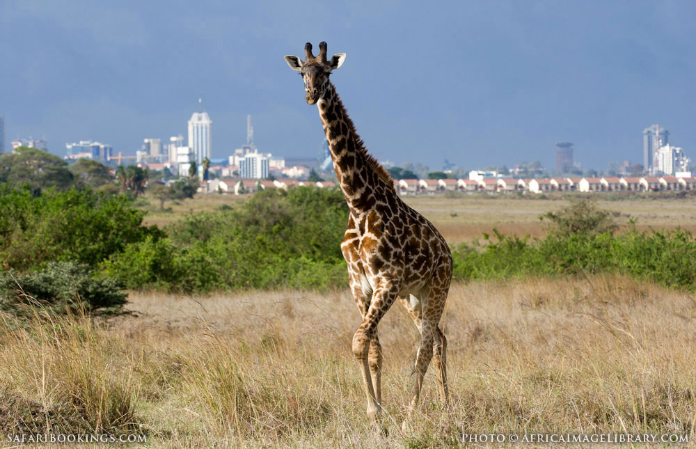 Национальный парк найроби, кения