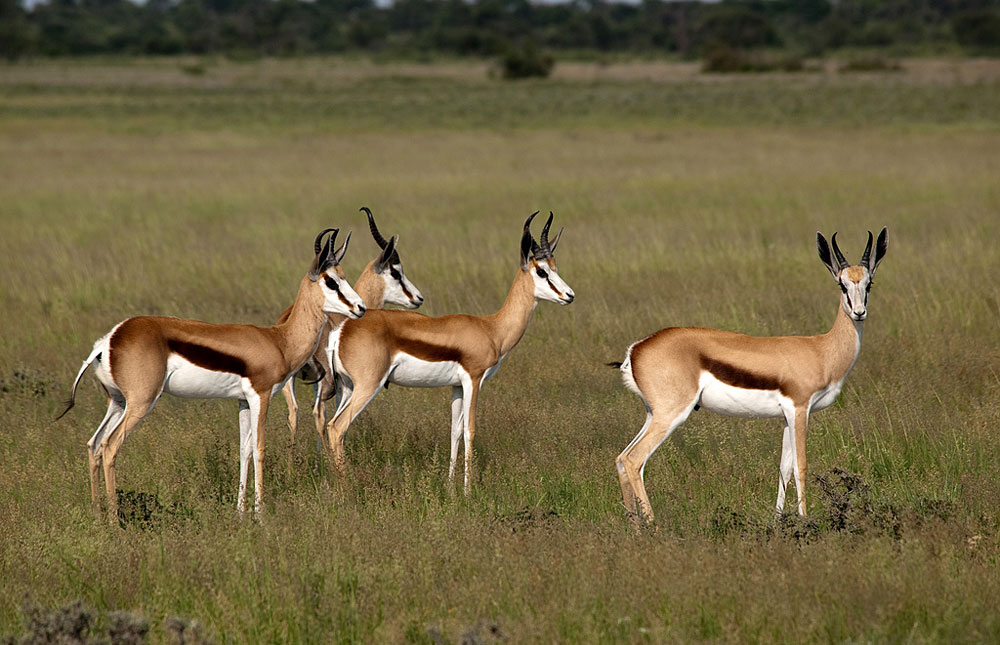 Springbok South Africa  city photos gallery : ... area, Botswana side in Kgalagadi Transfrontier Park, South Africa