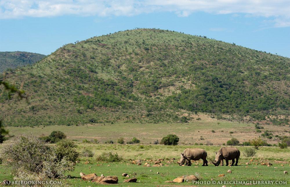 Pilanesberg South Africa 105