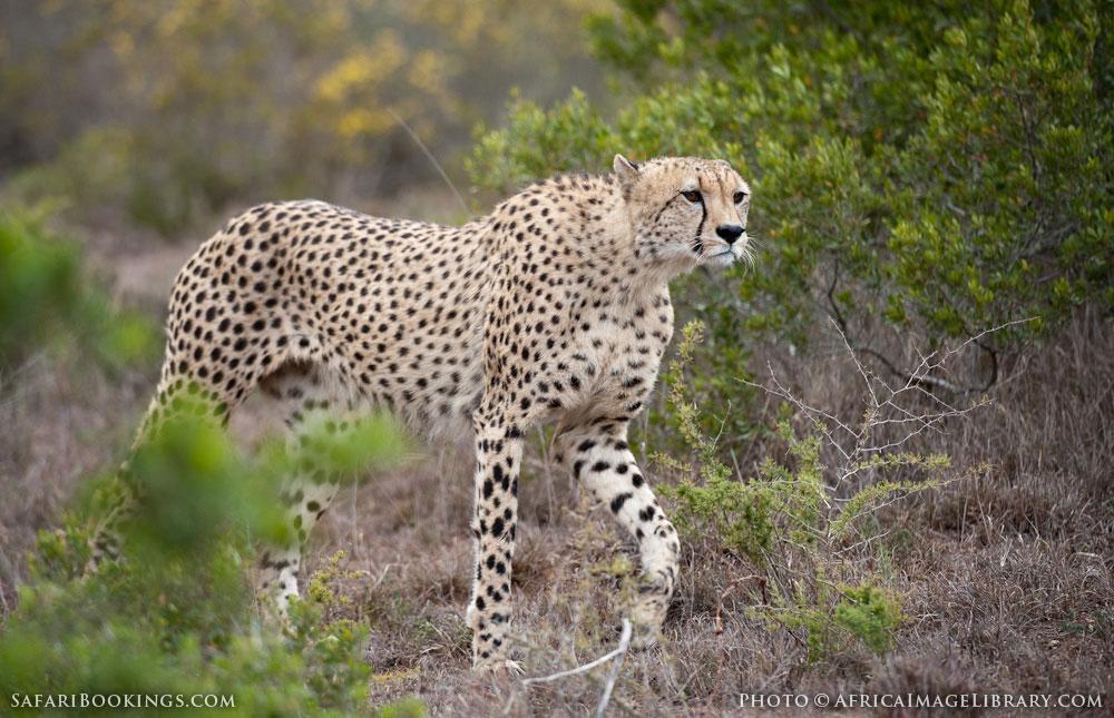 Shamwari Game Reserve – Travel guide, Map & More!