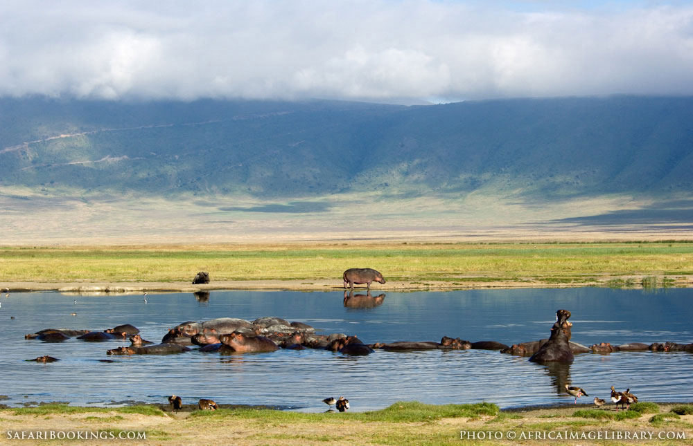 Hippopotamus in the water in Ngorongoro Conservation Area, Tanzania