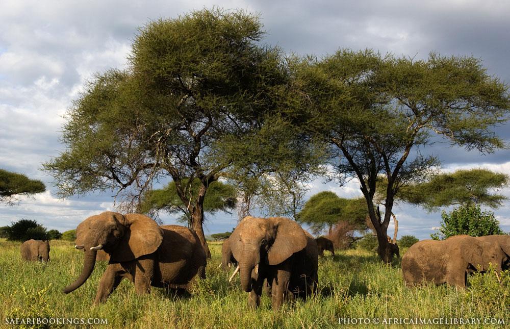 Tarangire Tanzania  city photo : Tarangire National Park – Travel guide, Map & More!