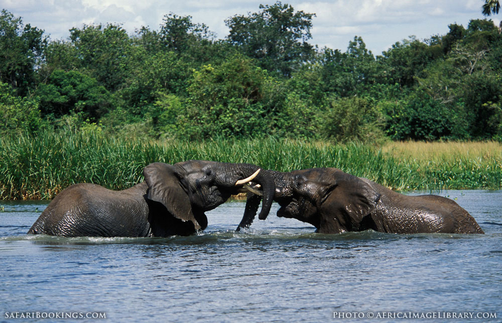 murchison falls national park travel guide map amp more