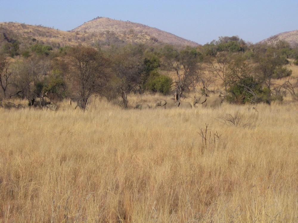 Chaise Pliante Africa Habitat – Palzon.com